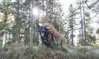 Позитивні моменти дружби між тваринами