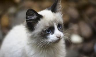 Прател для кішок: інструкція із застосування