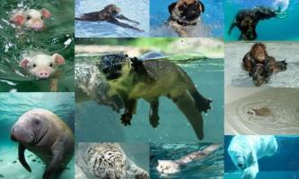 Чи правда, що всі тварини вміють плавати?