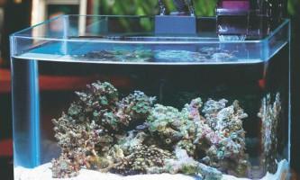 Правила утримання домашнього акваріума
