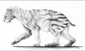 Запропоновано виділити новий різновид шаблезубих кішок
