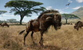 Предок антилопи гну, ймовірно, міг сурмити, як динозавр
