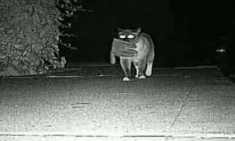 Злочини кота-клептомана зняли на камеру
