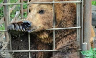 Придорожнього ведмедю знайшли зоопарк