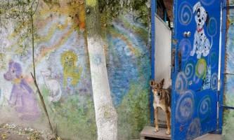 Притулок для собак у києві