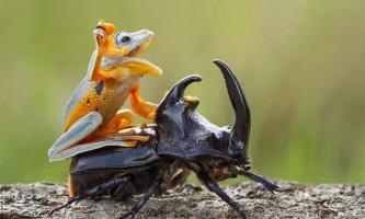 Пригоди деревної жаби і рогатої жука