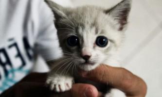Прикольні клички для котів хлопчиків: російські імена і прізвиська