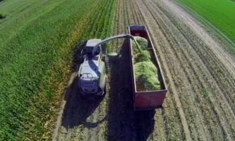 Кукурудзяний силос: заготівля і особливості годування
