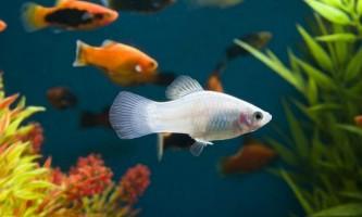 Пристосування, що дозволяють рибам витрачати менше енергії при русі у воді