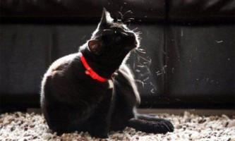 Проблема линьки у домашніх кішок і способи її попередження