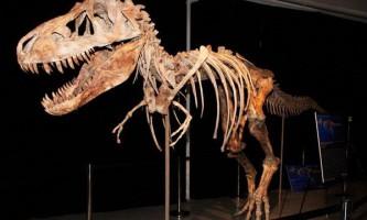 Проданий на аукціоні в сша скелет динозавра зажадали повернути монголії