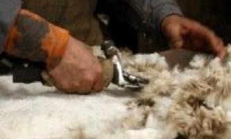 Продукція вівчарства