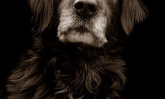 Проект треер скотт: собаки з притулку