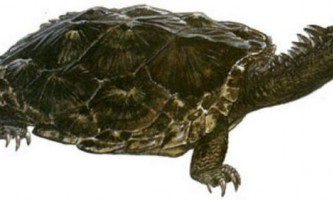 Проганохеліс - таємниці вимерлої черепахи