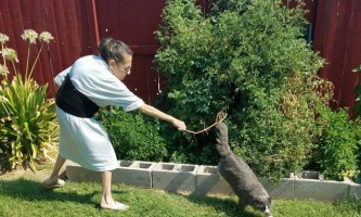 Проганяє прутиком кота бабусю зробили суперником али
