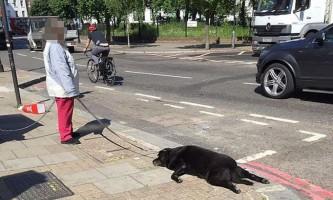 Перехожі були шоковані жінкою з мертвої собакою на повідку