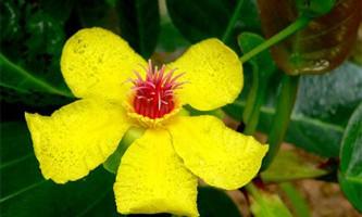 З`ясовано хід еволюції квіткових рослин