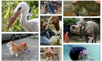 Протези для тварин: як допомогти братам нашим меншим?