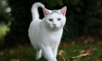 Протиглистові препарати для кішок