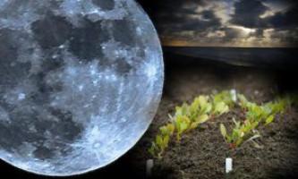 Проведення сільськогосподарських робіт в травні за місячним календарем