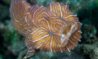 Психоделічна риба: «страшна красуня»