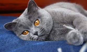 Психосоматика алергії на кішок