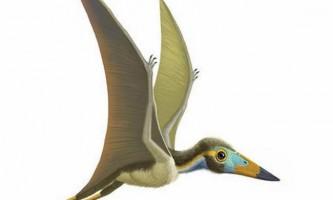 Птерозавр-горобець