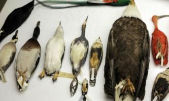 Складено найбільш повне еволюційне древо птахів