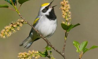 Птахи чують наближення буревіїв