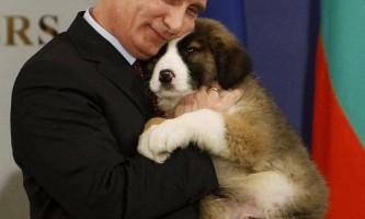Російський прем`єр - великий любитель тварин