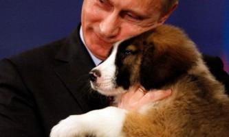 Путіну подарували цуценя болгарської породи
