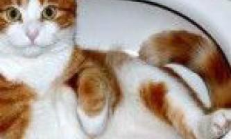 Робочий метод привчання кішки до унітазу