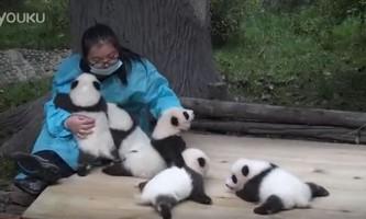 Робота - гладити панд