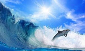 Радіація від фукусіми дійшла і до дельфінів, почавши вбивати їх