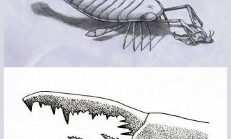 Ракоскорпіони, можливо, не були хижаками