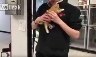 Поранений кошеня забігав після того, як йому приробили колеса