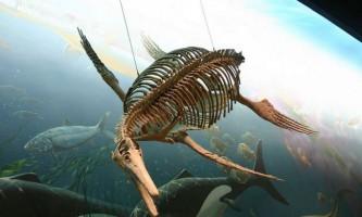 Розкрито таємницю зникнення іхтіозаврів