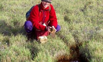 Рослини, знайдені під багатовіковим льодовиком, ожили в лабораторії