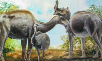 Розгадана таємниця дивних тварин дарвина