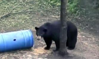 Розлючений ведмідь загнав туристів на дерево