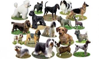 Різноманітність порід собак обумовлено лише кількома генами