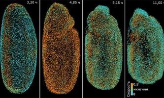 Розроблено нову технологію спостереження за розвитком ембріонів