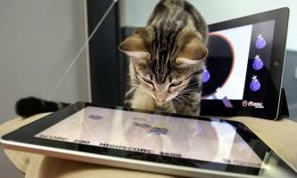 Розроблено гри на ipad спеціально для розваги кішок