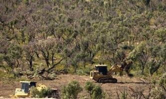 Руйнівний вплив вирубки квінслендський чагарників