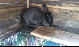 Розведення кролів: стаття