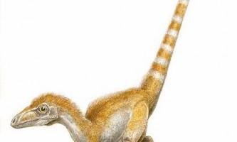 Рідкісні динозаври. Сінозауроптерікс