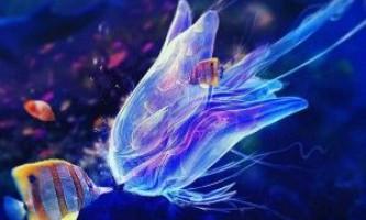 Рідкісні гості морського акваріума - коник і медуза