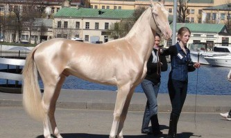 Рідкісні масті коней