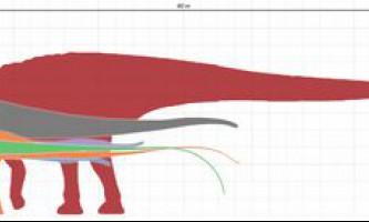 Рідкісний динозавр аргентинозавр