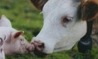 Реферат по тваринництву